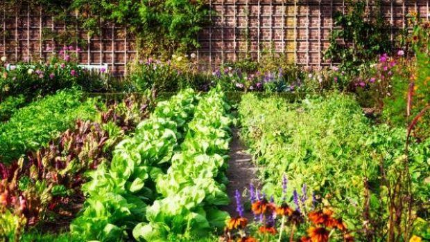 Come concimare il terreno con fertilizzanti naturali