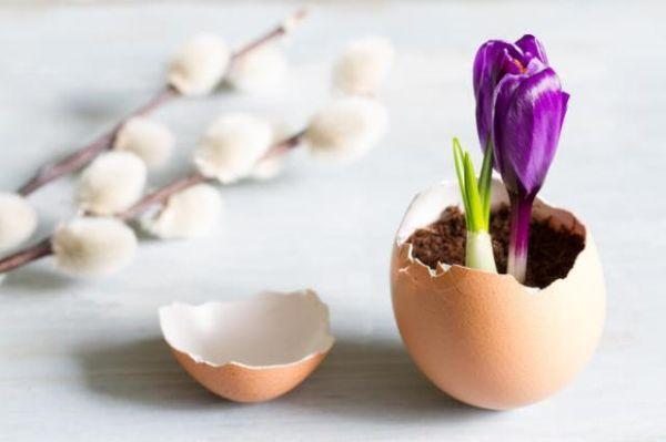 Guscio di uova come concime naturale minerale