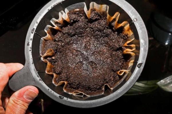 Fondi di caffè come fertilizzanti