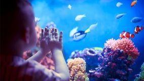 Idee e consigli su come scegliere e allestire un acquario in casa