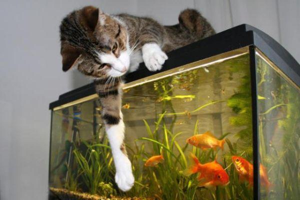 Allestire un acquario - Acquario per casa ...
