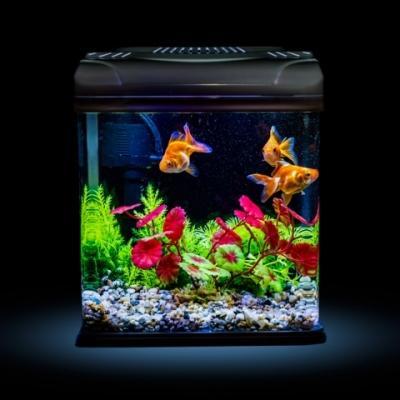 Allestire un acquario for Acquario per pesci