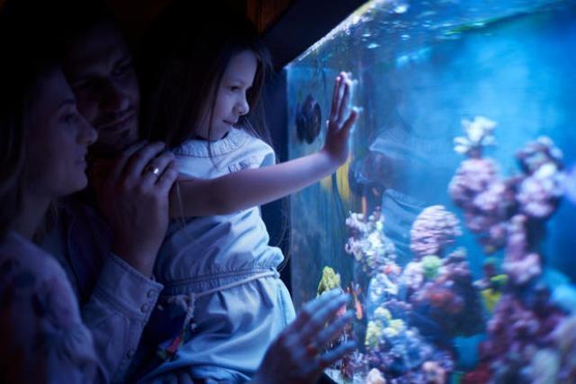 Il fascino dell'acquario