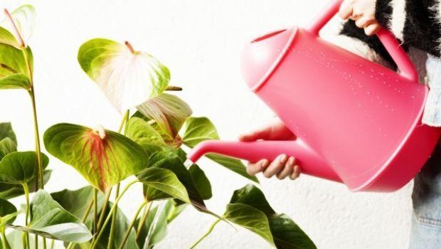 Prendersi cura del verde con gli annaffiatoi manuali e automatici