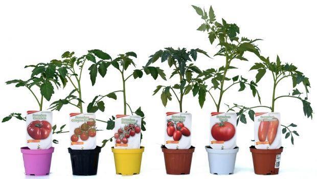 L'orto in vaso: prodotti freschi anche sul balcone
