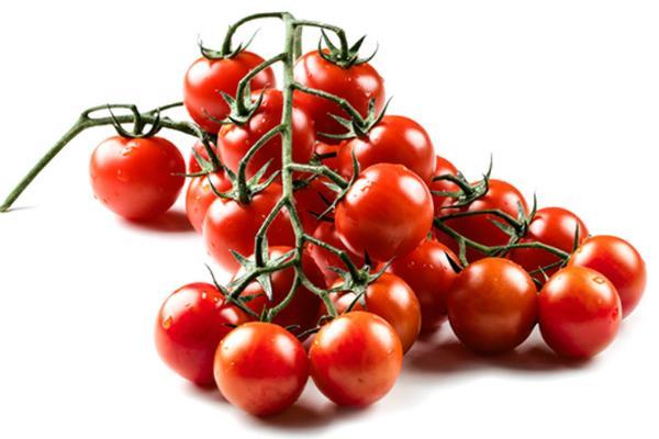 Pomodoro ciliegino di Savini Vivai