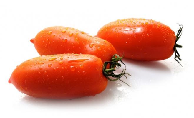 Pomodoro allungato per vaso di Savini Vivai