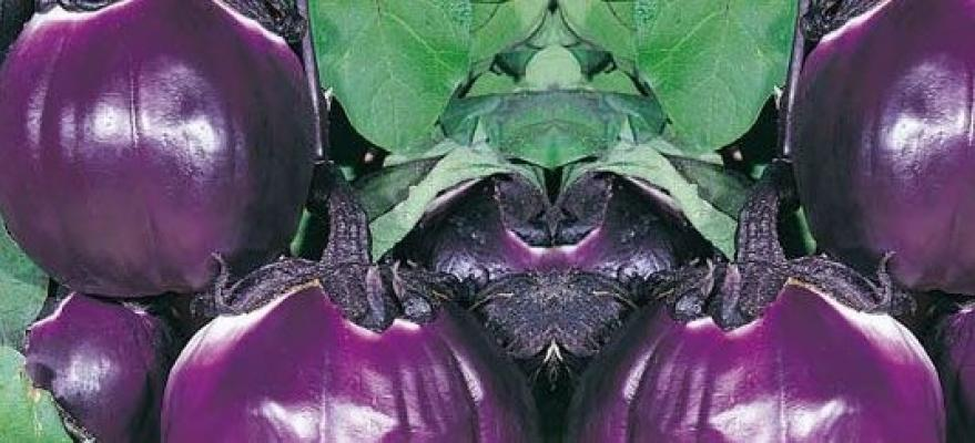 Melanzana Rosa da vaso di Orto 2000