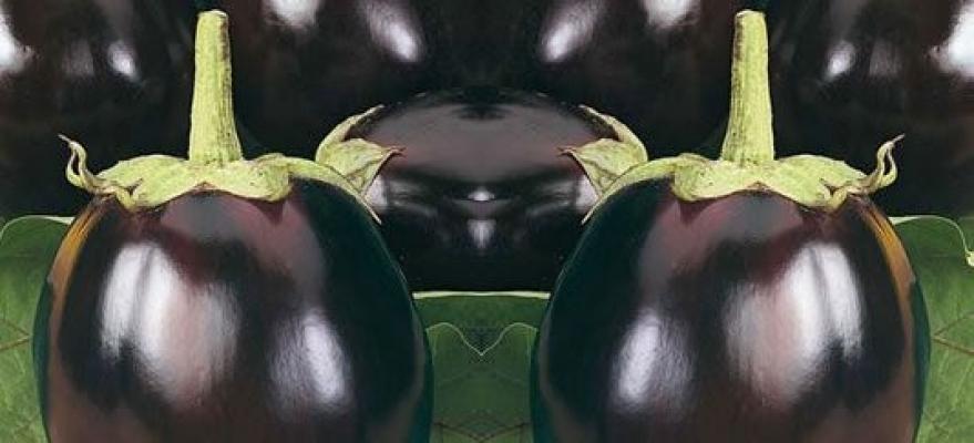 Melanzana tonda da vaso di Orto 2000