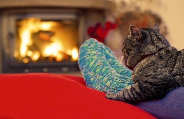 Animale da compagnia: il gatto