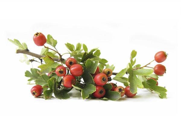 Frutti rossi di Biancospino da theepochtimes.com