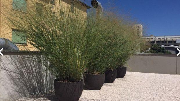 Rinnovare e arredare il giardino con i vasi particolari e fioriere fai da te
