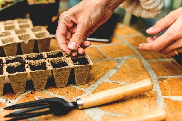 Vasi compostabili per sementi