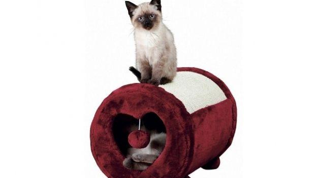 Scegliere gli accessori per il gatto in casa