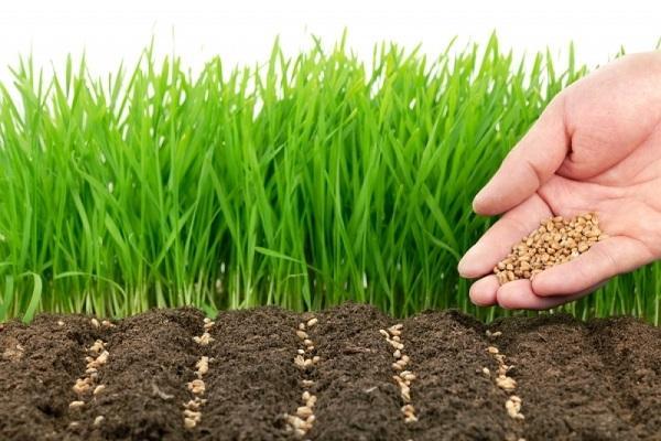 Raccolta dei semi, da erikhansen.com