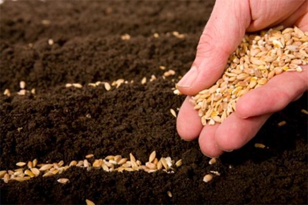 Raccolta dei semi