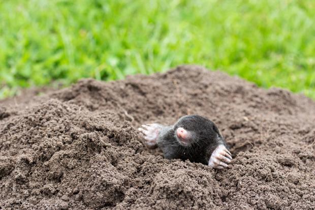 Come allontanare talpe da orto e giardino: soluzioni naturali