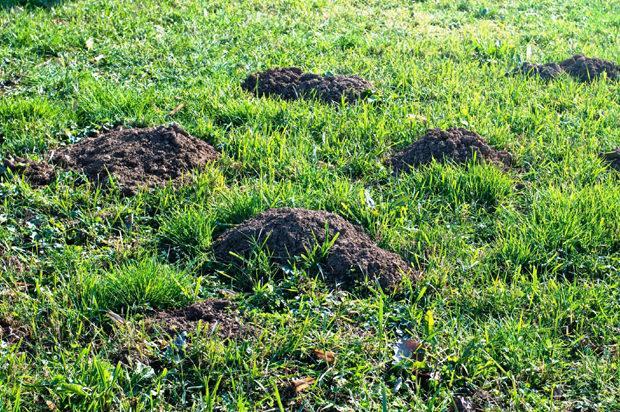 Buchi nel terreno realizzati dalla talpa