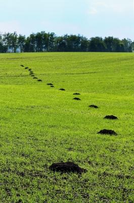 Terreno danneggiato da talpa