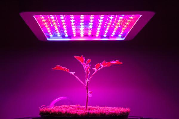 Attualmente nelle coltivazioni indoor si utilizza la luce a led.