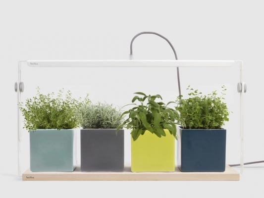 Lampada Quadra della start up Bulbo per la coltivazione indoor di piccole piante.