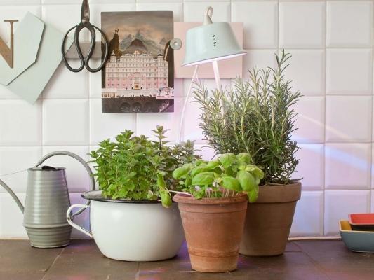 Lampada da coltivazione indoor Cynara Primavera di Bulbo