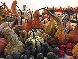 Zucche Ornamentali di Dagano Zucche