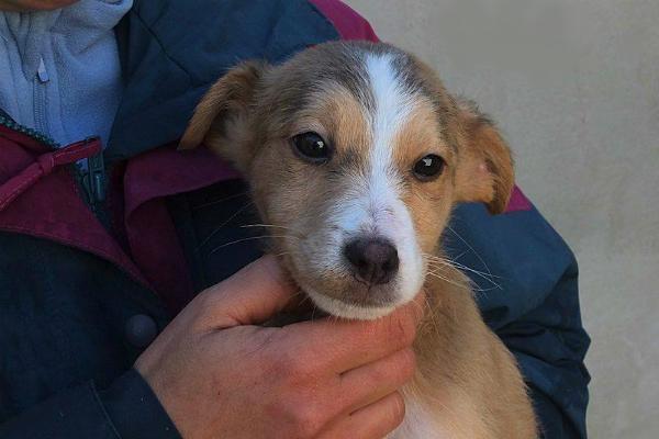 Cane in adozione presso Canili del Lazio