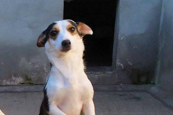 Cane in adozione in canili del Lazio
