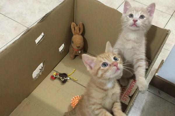 Gattini in adozione a Gattolandia