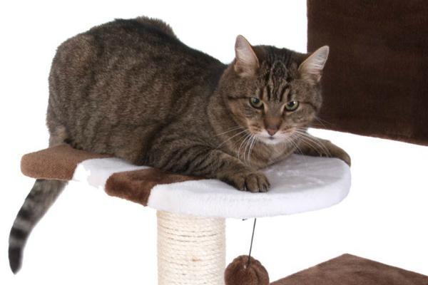 Gatto domestico su tiragraffi Zooplus