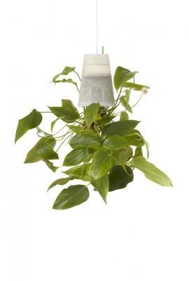 Regalo per Natale: vaso per piante aereo e capovolto di Boskke
