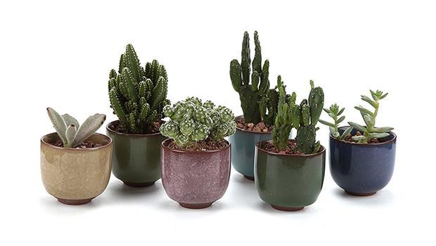 Contenitori per piante da interno