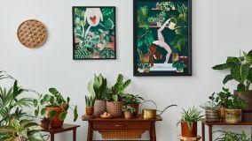 Inquinamento indoor: contrastarlo con le piante