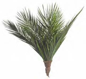 Sconfiggere l'inquinamento indoor con le piante - Palma da datteri nana