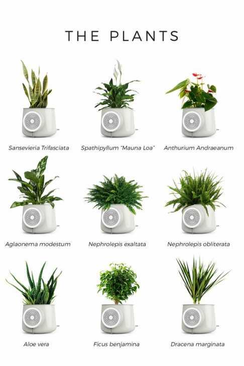 Clairy massimizza l'effetto purificante delle piante