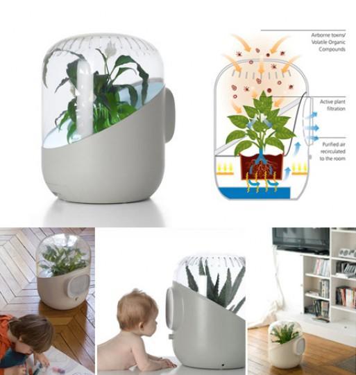 Andrea, purificare l'aria con l'utilizzo delle piante