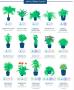 Le piante che riducono l'inquinamento indoor