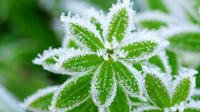 Piante invernali: come coltivarle
