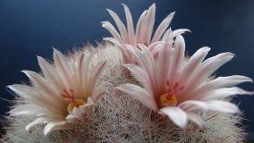 Piante grasse con fiore: consigli per la coltivazione