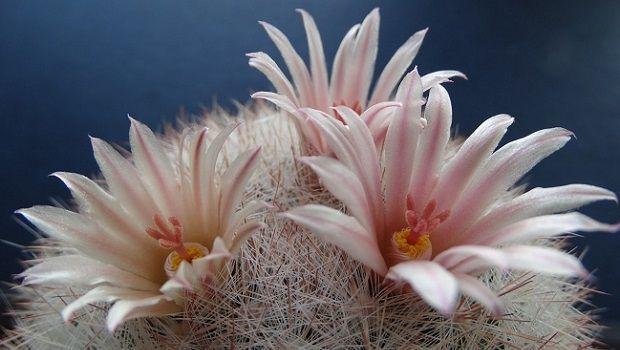 Consigli utili per coltivare le piante grasse con fiore