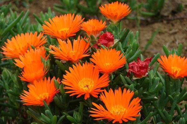 Piante Grasse Con Fiori.Piante Grasse Con Fiore Consigli Per La Coltivazione