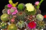 Varietà di piante grasse con fiore