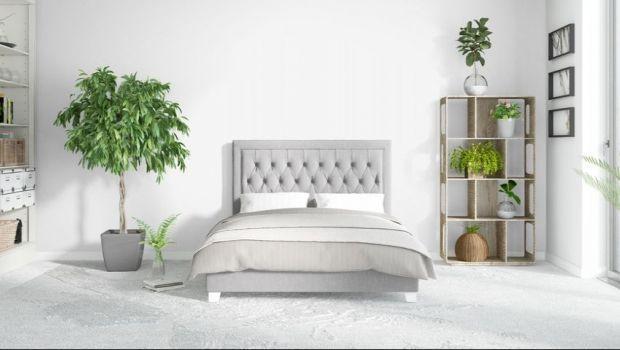 Quali tipi di piante sono conservati nella camera da letto ...