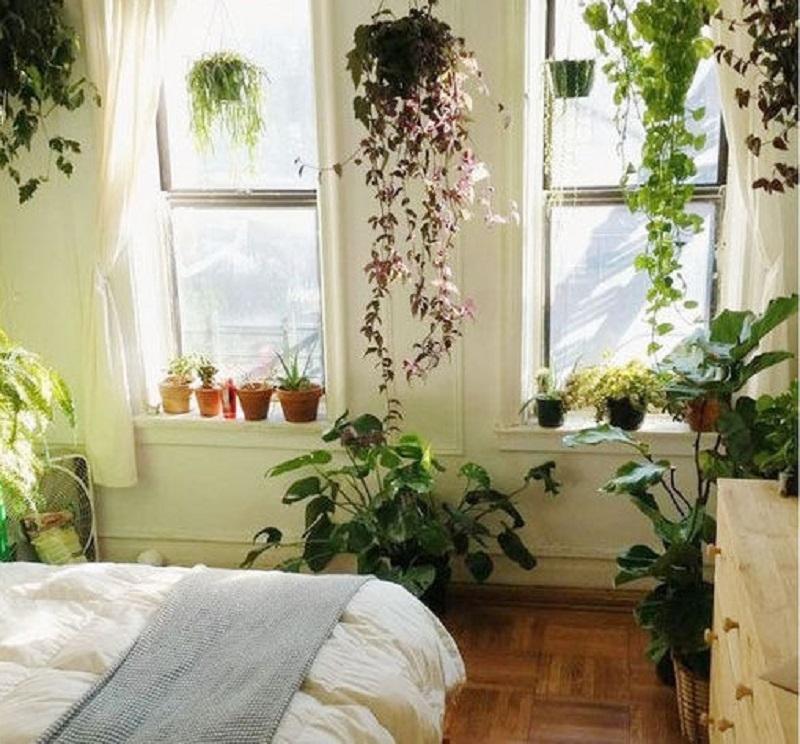 Le piante da camera da letto possono essere sistemate ovunque