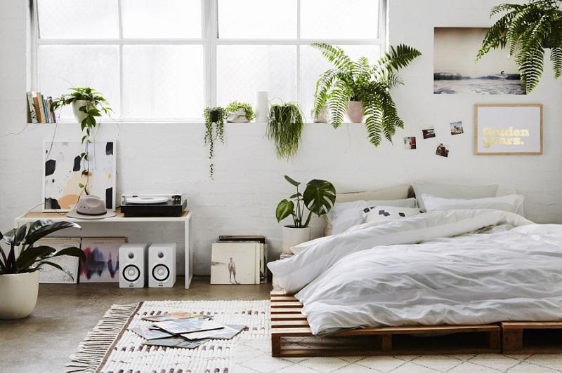 Sono tante le piante ideali in camera da letto