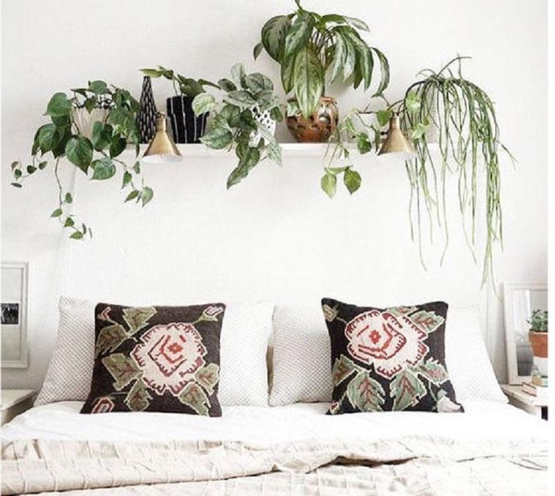 Angolo green con le piante da camera