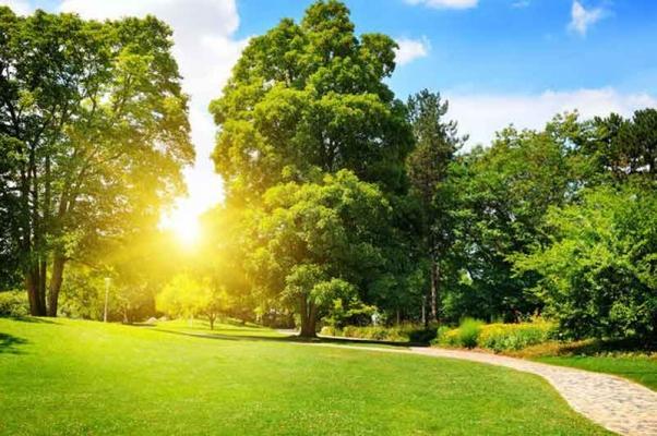 Il regno vegetale per bonificare i terreni inquinati