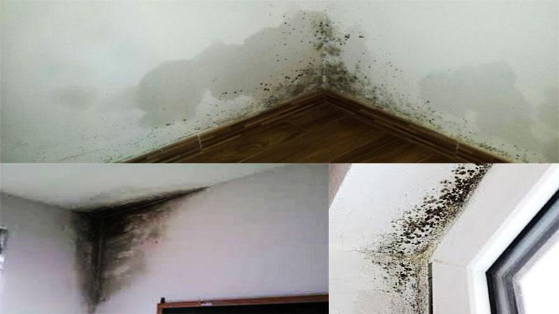 Come deumidificare la casa - Come deumidificare casa ...