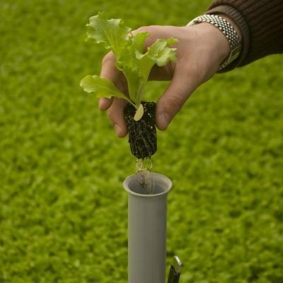 Piantatore di bulbi per giardino by BestPrato